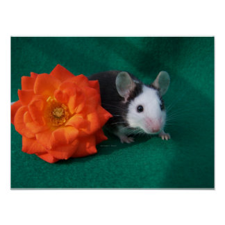 Black White Mouse and Orange tea rose Print