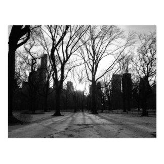 Black White NY Central Park nr 5 Post Card