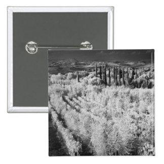 Black & White of vineyards, Montepulciano, Italy Button