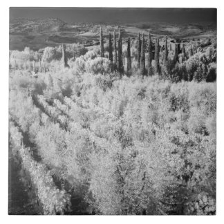 Black & White of vineyards, Montepulciano, Italy Ceramic Tile