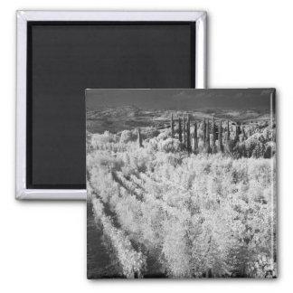 Black & White of vineyards, Montepulciano, Italy Refrigerator Magnet
