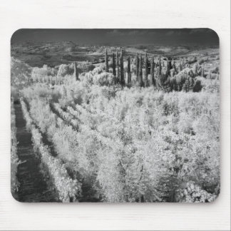 Black & White of vineyards, Montepulciano, Italy Mouse Pad