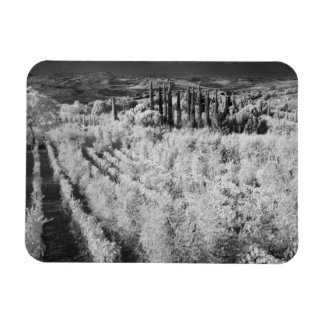 Black & White of vineyards, Montepulciano, Italy Vinyl Magnet