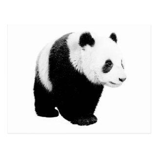 Black & White Panda Postcard