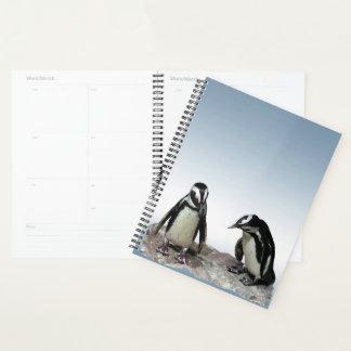 Black White Penguin Birds with Blue Sky Planner