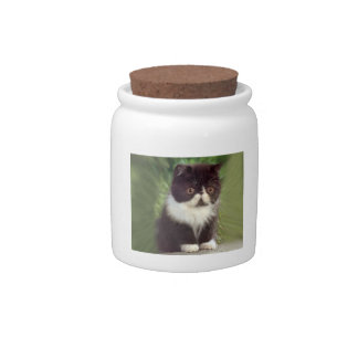 Black & White Persian Kitten Candy Jar