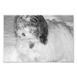 Black & White Photography Dog in a Fresh Snowfall Art Photo