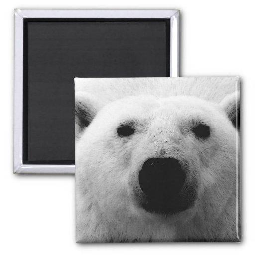 Black & White Polar Bear 2 Inch Square Magnet