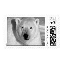 Black & White Polar Bear Postage