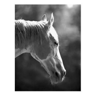 Black & White Pop Art Horse Postcard