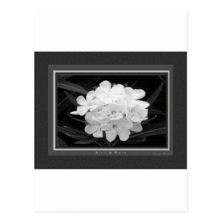 Black & White Postcard