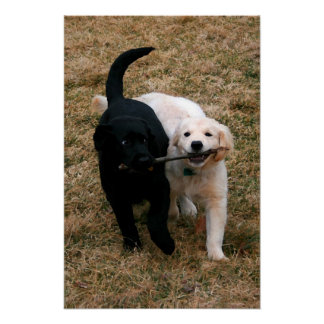 Black white puppies canvas print