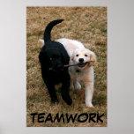 Black & white puppies poster