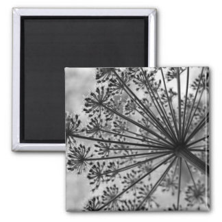 Black White Queen Anne s Lace Magnets
