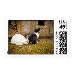 Black & White Rabbits Postage Stamps
