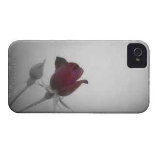 Black, White & Rose Photography iPhone 4 Case-Mate Case