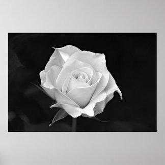 Black & White Rose poster