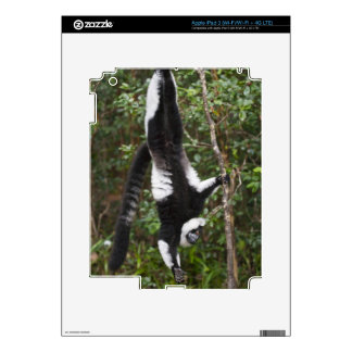 Black & white ruffed lemur hanging up-side-down decal for iPad 3