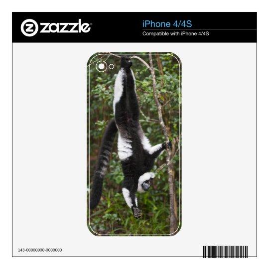 Black & white ruffed lemur hanging up-side-down iPhone 4S skin