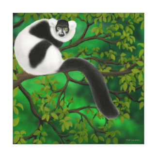 Black & White Ruffed Lemur in Forest Wrapped Canva Canvas Print