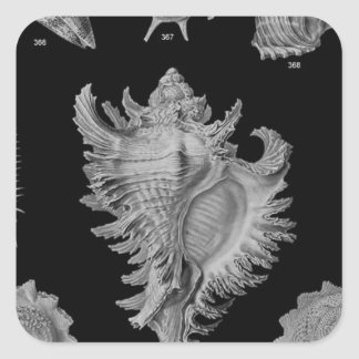 black &white sea shells square sticker