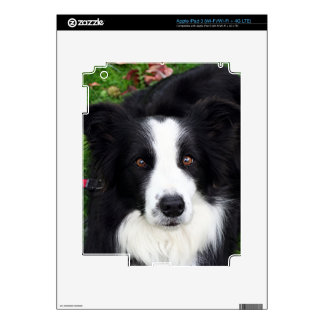 Black & white sheep dog decals for iPad 3