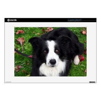 Black & white sheep dog decals for laptops