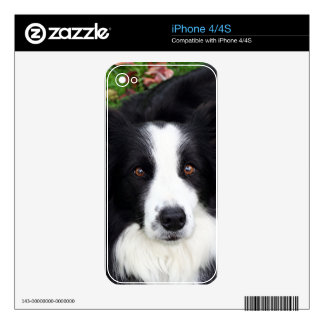 Black & white sheep dog decals for the iPhone 4S