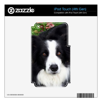 Black & white sheep dog iPod touch 4G decals