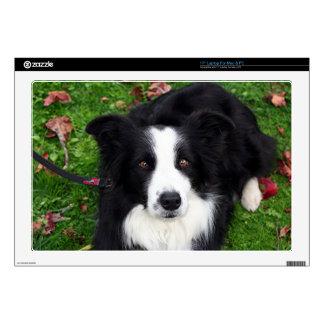 Black & white sheep dog laptop decals