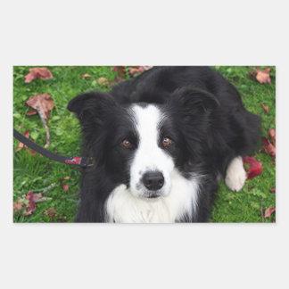 Black & white sheep dog rectangular sticker