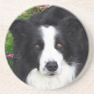 Black & white sheep dog sandstone coaster
