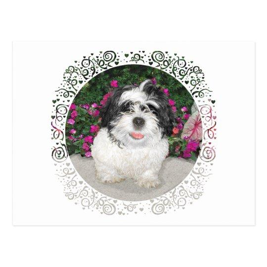 Black & White Shih Tzu Puppy Rescue Dog Postcard