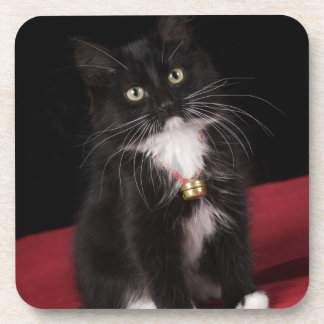 Black & white short-haired kitten,2 1/2 months beverage coaster