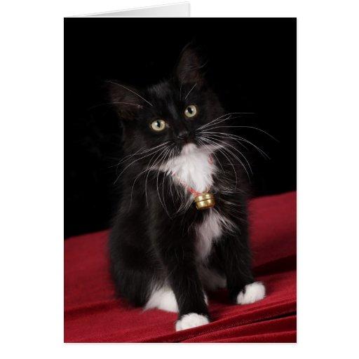 Black & white short-haired kitten,2 1/2 months cards