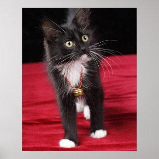 Black & white short-haired kitten, 2 1/2 months print
