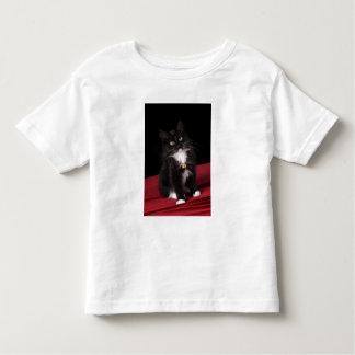 Black & white short-haired kitten,2 1/2 months toddler t-shirt
