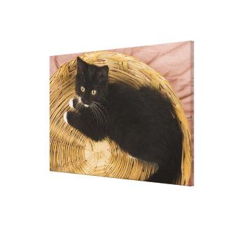 Black & white short-haired kitten on hamper lid, 2 canvas print
