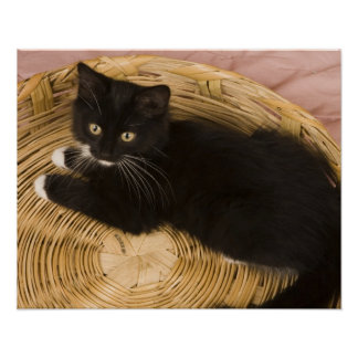 Black & white short-haired kitten on hamper lid, 2 poster