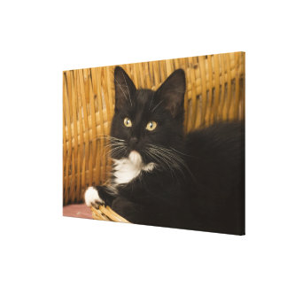 Black & white short-haired kitten on hamper lid, canvas print