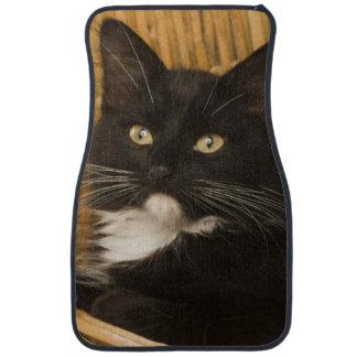 Black & white short-haired kitten on hamper lid, car mat