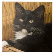 Black & white short-haired kitten on hamper lid, ceramic tile