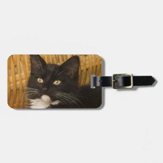 Black & white short-haired kitten on hamper lid, luggage tag