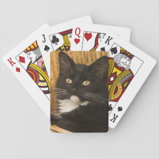 Black & white short-haired kitten on hamper lid, poker cards