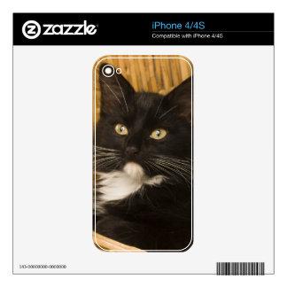 Black & white short-haired kitten on hamper lid, skin for iPhone 4S