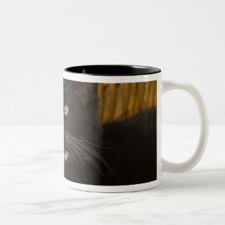 Black & white short-haired kitten on hamper lid, Two-Tone coffee mug