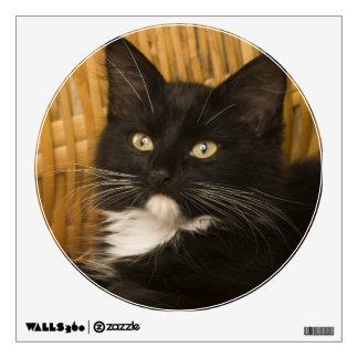 Black & white short-haired kitten on hamper lid, wall decal