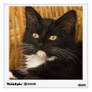Black & white short-haired kitten on hamper lid, wall sticker
