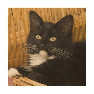 Black & white short-haired kitten on hamper lid, wood print