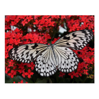 Black white spotted butterfly on lush red flowers postcard